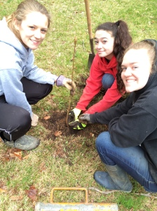 Seniors plant trees on Beautification Day. (left to right: Shauna Bowen, Marissa Cormier, Emily Ohmer)